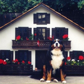 Swiss Doghouse