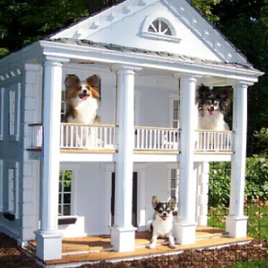 Georgetown Doghouse
